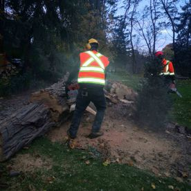 STS tree services - tree cutting