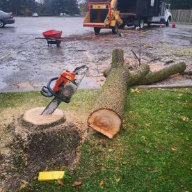 STS Tree Services - our expert team