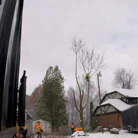 Emergency tree removal service on winter