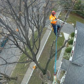 STS Tree Service - expert team