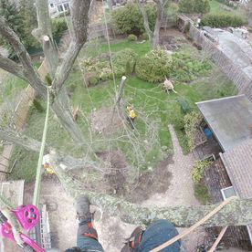 STS Tree Service - tree removal service