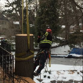 winter tree removal